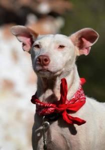 Antonia, en av våra fantastiska hundar som är tillgänglig för adoption <3